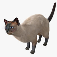 3d model of siamese cat pose 4