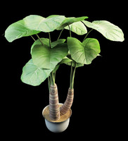 alocasia palm 3d 3ds
