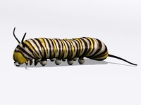 monarch larva 3d 3ds