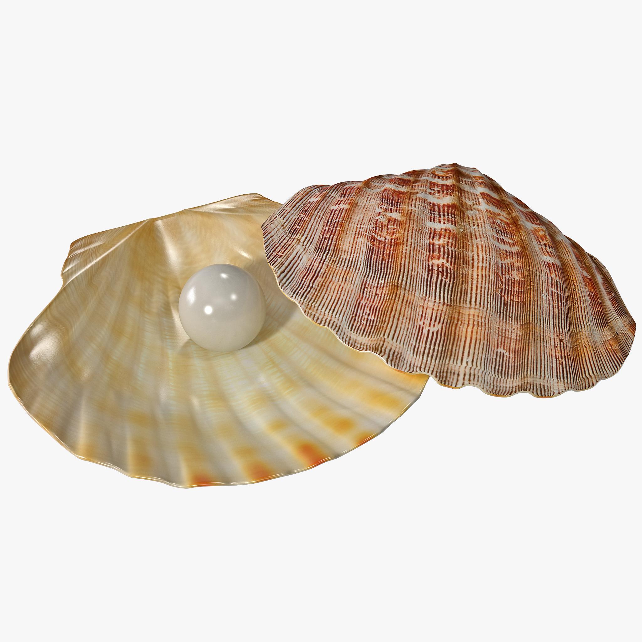 Pearl in Shell 2_1.jpg
