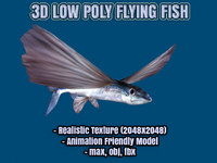 Flying Fish Realistic Low Poly Model (Exocoetidae)