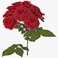 maya rose bush