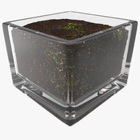 Square Glass Vase With Soil