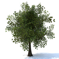 tree branches 3d c4d