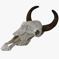 cow skull max