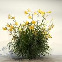 Flower_85