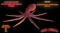 Octopus Low Poly Model Rigged Animated