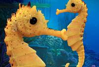seahorse sea 3d ma
