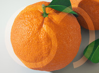 3d model orange fruit