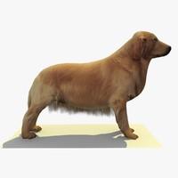 golden retriever dog 2 3d 3ds