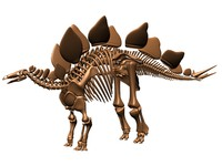 3d stegosaurus skeleton dinosaur model