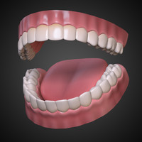 mouth interior gums teeth tongue 3d max
