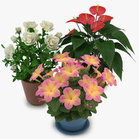 Flowers in Pot 01