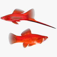 3d model of swordtail male female