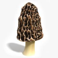 3d model morel mushroom