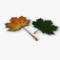 3d model maple leaves