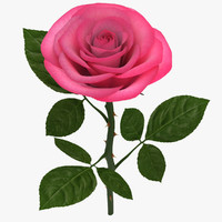 3ds max rose branch pink 02
