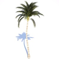 3ds coconut palm tree