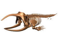 3d skeleton greenland whale animal skull