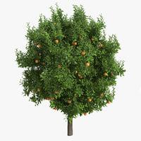 3d orange tree