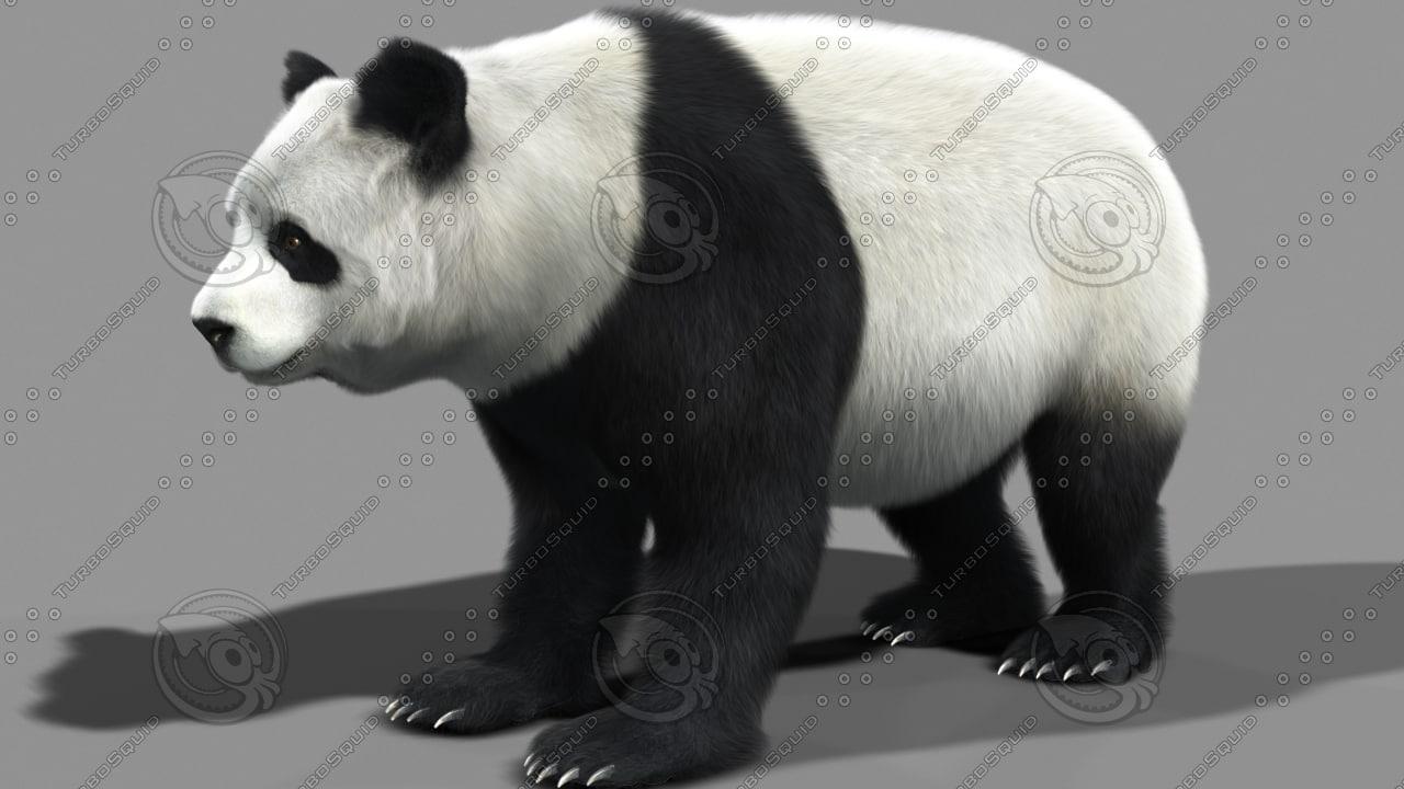 Panda_final_Vraycam4_Fur_.jpg