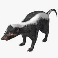 skunk rigged 3d max