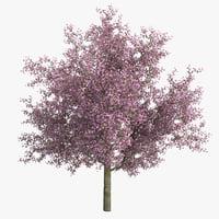 cherry tree 3d c4d