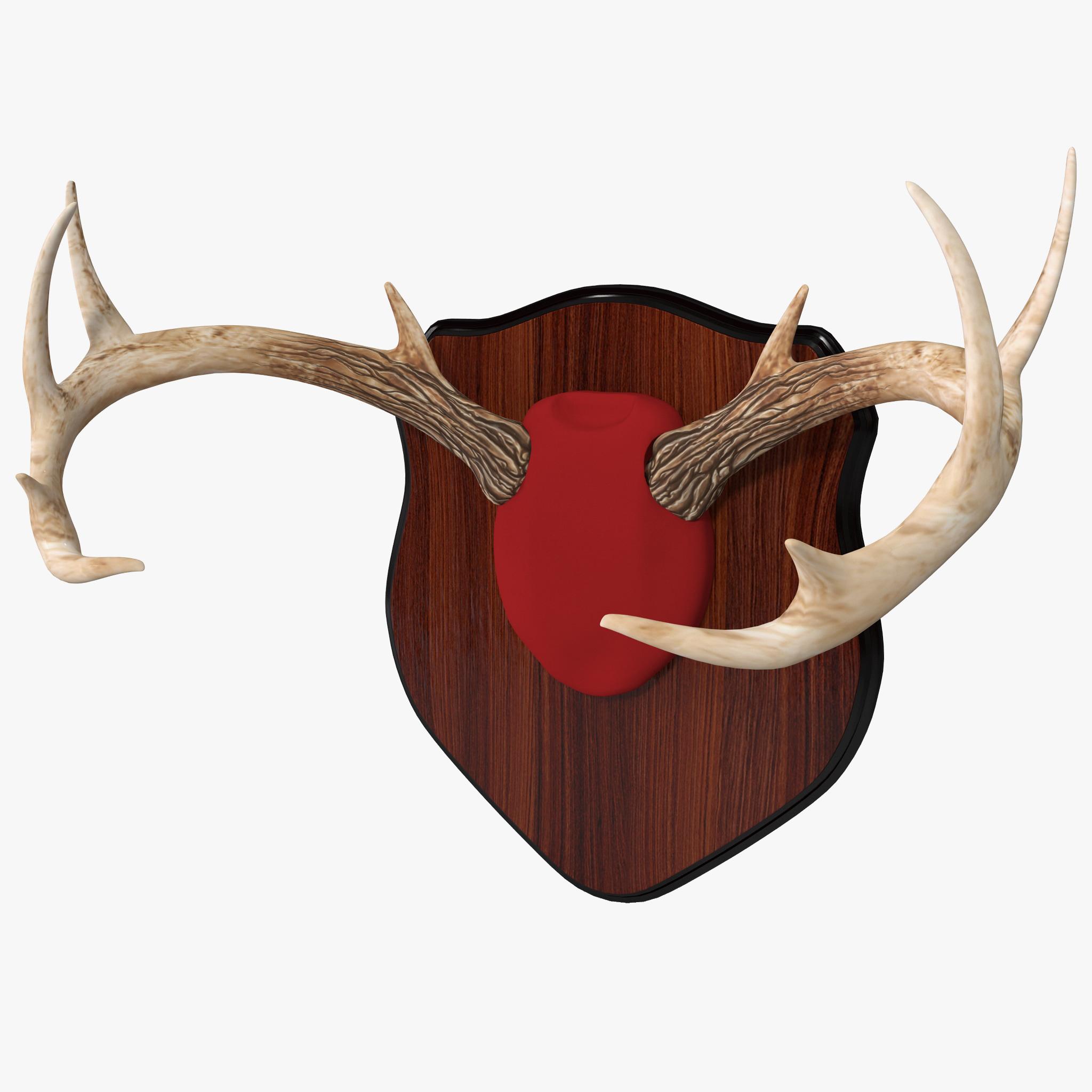 Mounted Deer Antlers_1.jpg
