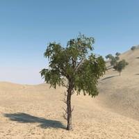 3d ghaf tree model