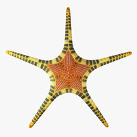 3d mosaic starfish