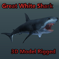 great white shark rigged 3d model