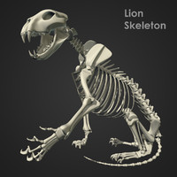 maya rigged lion skeleton bones