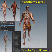 anatomy internal rig 3d model