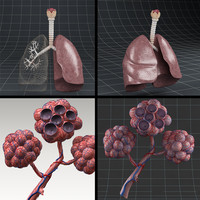 3d model anatomy pack