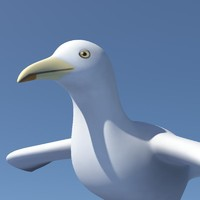 seagull sea gull 3d dxf