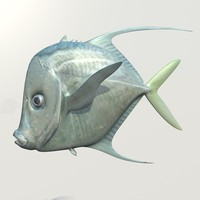 lookdown fish c4d