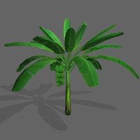 3d banana tree