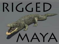 3d model realistic crocodile rigged
