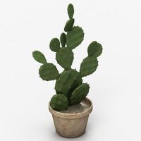maya realistic cactus