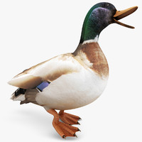 realistic duck rigged 3ds