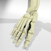 free max model foot bone