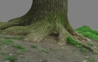 cutted tree trunk 3d x