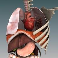 max human organs