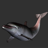 3d model dolphin fish sea