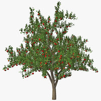3d apple tree model