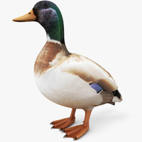 3ds realistic duck