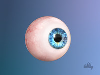 eyeball eye 3d model