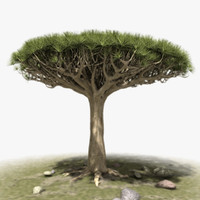 3d african tree
