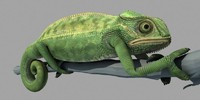 3d chameleon reptile lizards model