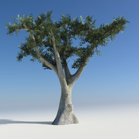 maya olive tree